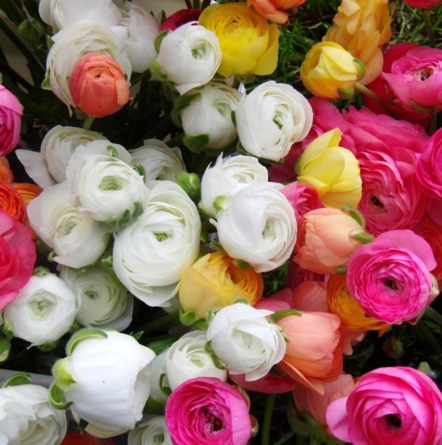 Цветы лютики посадка и уход фото