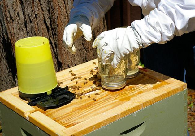 Пчела из банки своими руками