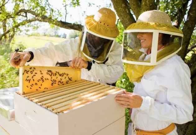 Инвентарь пчеловода своими руками